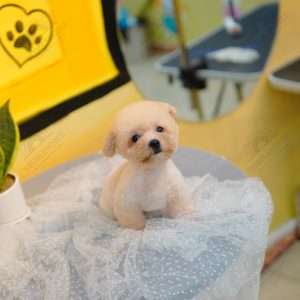 cho-poodle-vang-mo-003